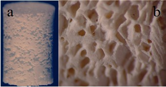 Hydroxyapatite ceramic scaffold